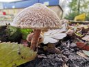 Super Macro Mushroom | 1/100 sec | f/2.2 | 4.0 mm | ISO 64
