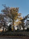Trees |
