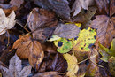 Autumn Decay | 1/20 sec | f/8.0 | 135.0 mm | ISO 200
