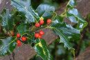 Close Up Berries | 0.4 sec | f/16.0 | 135.0 mm | ISO 200