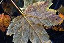 Close Up Leaf | 1/25 sec | f/8.0 | 135.0 mm | ISO 200