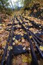 Leaves On The Line | 1/50 sec | f/11.0 | 18.0 mm | ISO 400