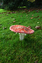 Fly Agaric 2 | 1/40 sec | f/16.0 | 25.0 mm | ISO 200