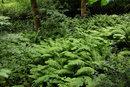 Field Of Ferns   1/160 sec   f/4.0   35.0 mm   ISO 400