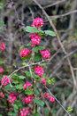 Wild Flowers | 1/250 sec | f/5.6 | 85.0 mm | ISO 400