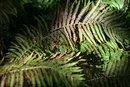 Ferns   1/320 sec   f/4.0   85.0 mm   ISO 200