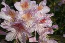 Flowers   1/250 sec   f/7.1   27.0 mm   ISO 160