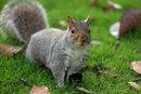 Squirrel | 1/320 sec | f/2.8 | 118.0 mm | ISO 100