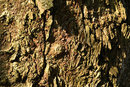 Texture In Gnarled Tree Bark | 1/20 sec | f/16.0 | 160.0 mm | ISO 100