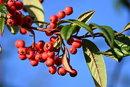 Berries | 1/400 sec | f/6.3 | 250.0 mm | ISO 200