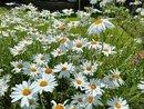 Flowers | 1/3175 sec | f/1.9 | 5.6 mm | ISO 111