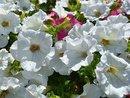 Flowers | 1/1905 sec | f/1.9 | 5.6 mm | ISO 104