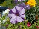 Flower | 1/1905 sec | f/1.9 | 5.6 mm | ISO 134