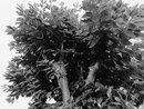 B&W Tree | 1/33 sec | f/1.9 | 5.6 mm | ISO 725