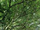 Tree Top | 1/100 sec | f/1.9 | 5.6 mm | ISO 206