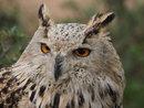 Owl (12-100mm lens) | 1/400 sec | f/4.0 | 100.0 mm | ISO 1250