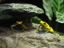 Frog | 1/80 sec | f/4.0 | 40.0 mm | ISO 1000