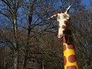 Giraffe | 1/640 sec | f/8.0 | 40.0 mm | ISO 400