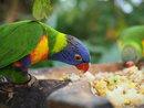 Parrot | 1/80 sec | f/3.2 | 40.0 mm | ISO 320