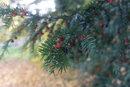 Berries - 1/125 sec | f/1.8 | 11.9 mm | ISO 100