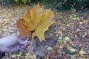 Leaves - 1/100 sec | f/2.5 | 11.9 mm | ISO 100
