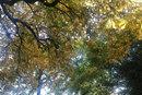 Treetops - 1/160 sec | f/2.8 | 11.9 mm | ISO 100