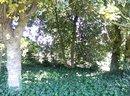 Trees | 1/100 sec | f/2.0 | 3.8 mm | ISO 200