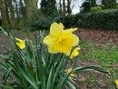 Daffodil | 1/282 sec | f/1.8 | 4.0 mm | ISO 50