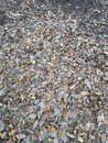 """Leaves Ground 