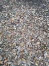 Leaves Ground |