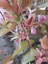 Blossom | 1/182 sec | f/1.8 | 5.6 mm | ISO 50