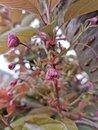Blossom | 1/283 sec | f/1.8 | 5.6 mm | ISO 50