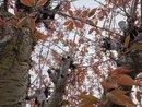Tree | 1/1508 sec | f/1.8 | 5.6 mm | ISO 50