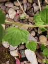 Leaf | 1/125 sec | f/2.2 | 2.3 mm | ISO 50