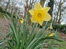 Daffodil | 1/595 sec | f/1.6 | 5.6 mm | ISO 50