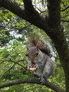 Squirrel | 1/123 sec | f/2.0 | 2.4 mm | ISO 64