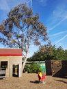 Trees | 1/1366 sec | f/2.0 | 2.4 mm | ISO 64