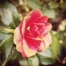 Flower Crop And Nostalgia Filter