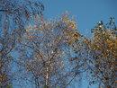 Trees 42mm Kit Lens | 1/200 sec | f/8.0 | 42.0 mm | ISO 200
