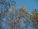 Trees 45mm Prime | 1/400 sec | f/5.6 | 45.0 mm | ISO 200
