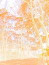 Watercolor | 1/100 sec | f/5.6 | 24.0 mm | ISO 200