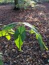 Leaf | 1/52 sec | f/1.7 | 4.4 mm | ISO 51