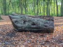 Log Slight Bokeh | 1/36 sec | f/1.7 | 4.4 mm | ISO 49
