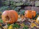 Pumpkin | 1/143 sec | f/1.7 | 4.4 mm | ISO 44