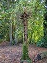 Tree Owl | 1/45 sec | f/1.7 | 4.4 mm | ISO 54