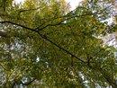 Woods | 1/159 sec | f/1.7 | 4.4 mm | ISO 52