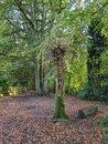 Woods | 1/49 sec | f/1.7 | 4.4 mm | ISO 54