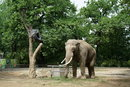 Elephant | 1/1600 sec | f/2.0 | 50.0 mm | ISO 100