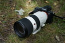 Sony 70-200mm G Master Lens | 1/60 sec | f/7.1 | 50.0 mm | ISO 250