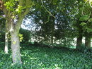 Trees   1/60 sec   f/2.8   5.0 mm   ISO 100